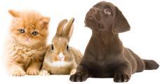 Logo der Firma Alles für Ihren kleinen Liebling, Hund, Katze, Nager, Vögel