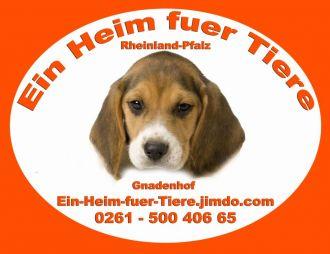 Logo der Firma Ein Heim fuer Tiere Rheinland - Pfalz