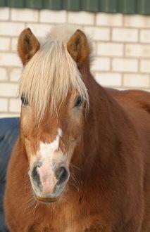 Firma Pferdetraining & Reitunterricht aus Bornheim