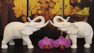 White Elephant Thai Massage in Kempen
